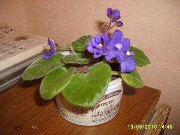 Вот мои цветочки, пока немного но коллекцию пополняю…
