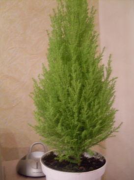 Помогите – Что за растение???