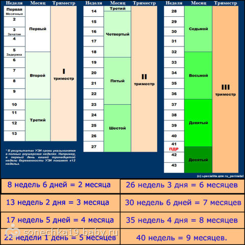 Таблица беременности недели и месяцы