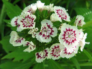 Цветы для поднятия настроения!!!