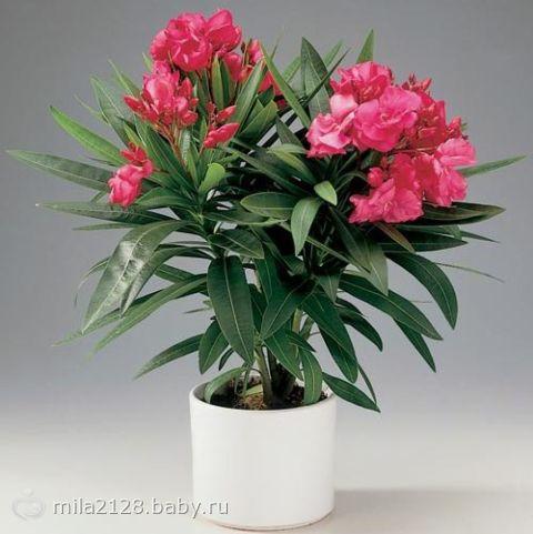 Цветы для детской!!! Какие цветочки рекомендуют ставить в детскую… а какие не стоит…