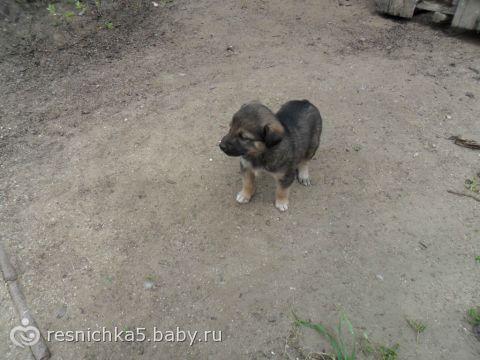 Кто из Баку помогите Дворовая собака родила 9 щенят пожалуйста помогите их распределить. 4 самца и 5 самок.