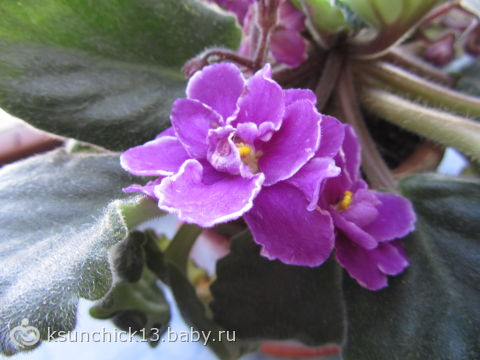 А что вас радует в такой «весенний» день? ))))