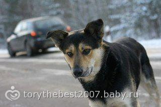 Верный пес(история с контакта)