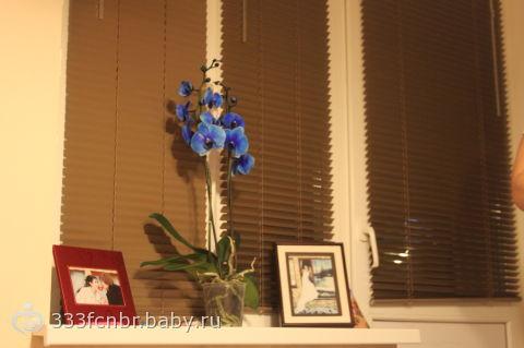 орхидея. как ухаживать?